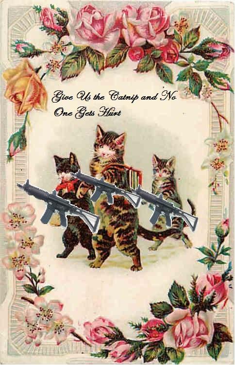 cat commandos