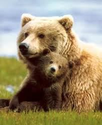 grizzly-mama-with-cub