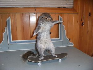 squirrel skateboard