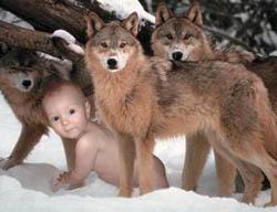 raisedbywolves