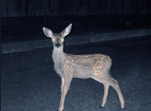 Deer-in-the-Headlights