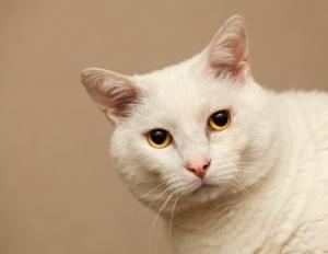 white_cat_5488