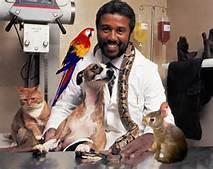 exotic vet